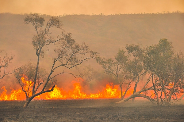 Tenders will soon be called for a range of projects in southern Tasmania to repair more than 119 kilometres of roads, bridges, and other assets that were damaged by the recent fires.