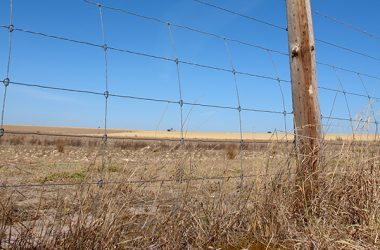 Tenders are open to rebuild the $25 million South Australian Dog Fence, which spans 2150 kilometres and will require 71,000 timber posts, 127,500 steel droppers and more than 7000 kilometres of wire.